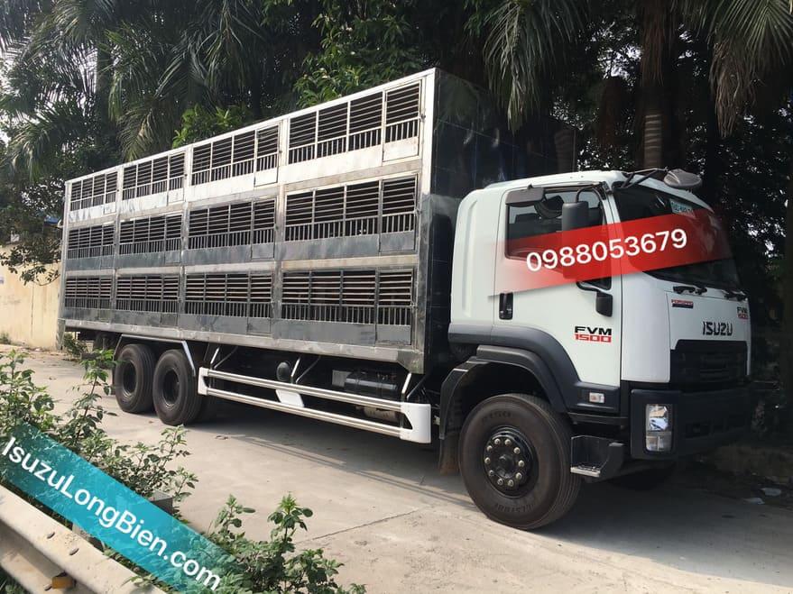xe tai isuzu fvm 1500 15 tan thung cho gia suc trau bo lon
